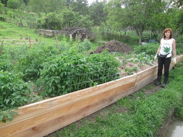 Paradajky, divé paradajky a papriky na vyvýšenom záhone