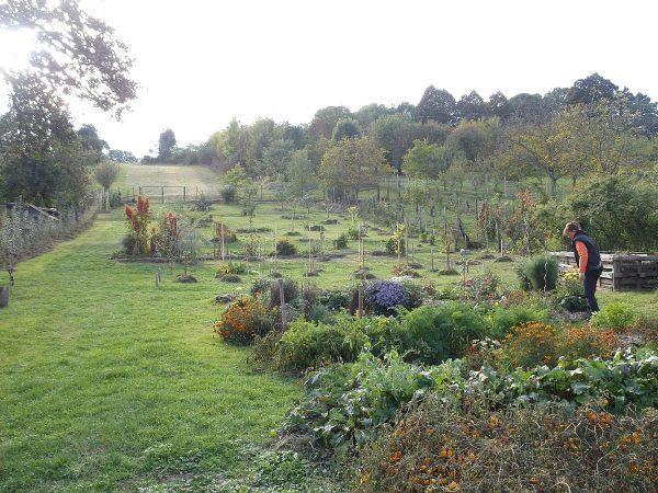 Takto vyzerá záhrada po vyše polroka práce na jej úpravách