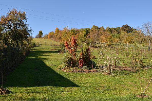 jeseň v našej záhrade