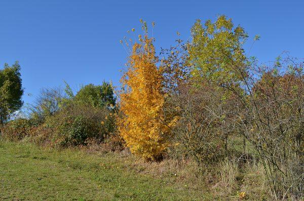 jesen_2016-17
