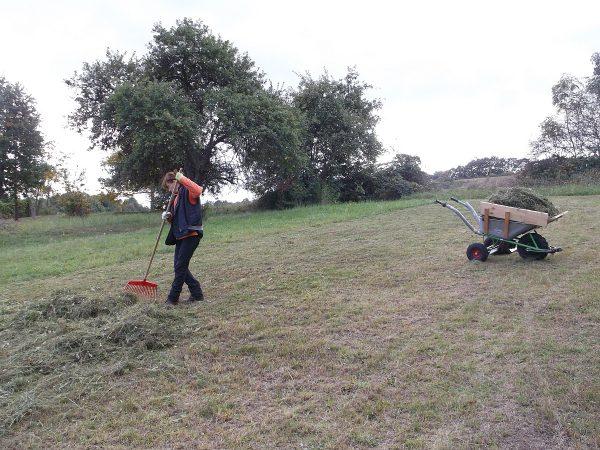 Švédske hrable a Motúčko - dvaja skvelí pomocníci, ktorí uľahčujú hrabanie a zvážanie sena v našej záhrade