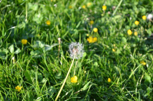 kvety-01