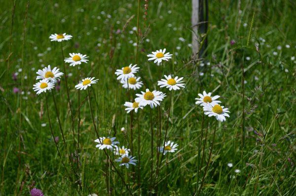 kvety-09