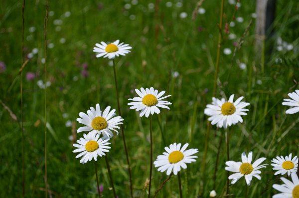 kvety-10
