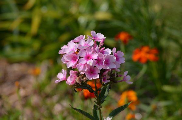 kvety-14