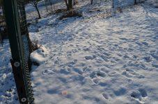 stopy sŕn v snehu