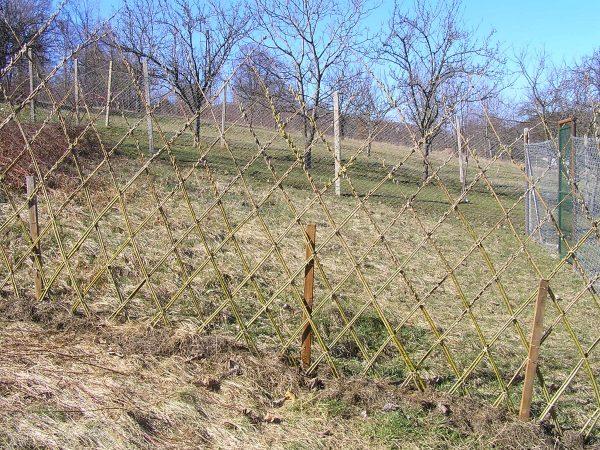 plot z vŕbových sadeníc