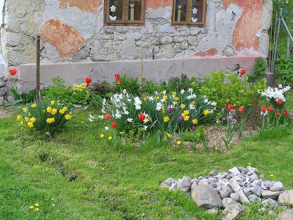 kvety v predzáhradke