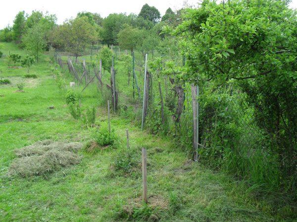 opravený plot
