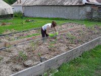 sadenie priesad do vyvýšeného záhona