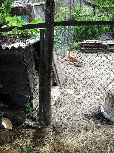 diera v plote