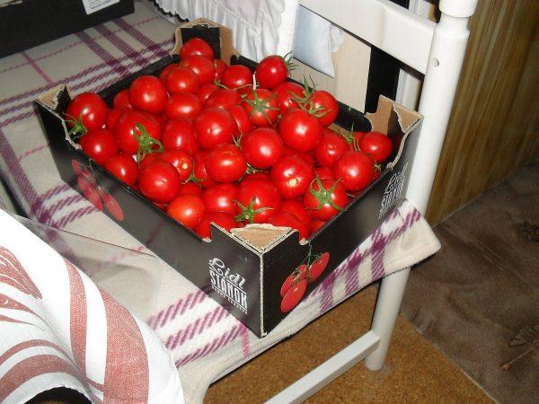 deväť kilo paradajok