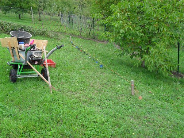 vymeranie živého plota