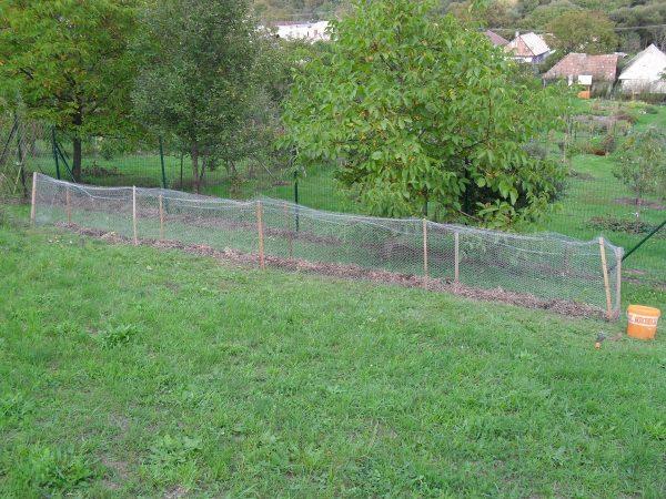 ohradený živý plot